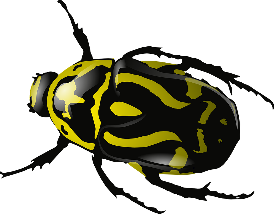Bug  Insect  Beetle  Wasp  Yellow  Black  Wildlife. Free vector graphic  Bug  Insect  Beetle  Wasp  Yellow   Free