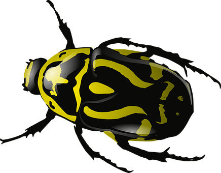 Bug, Insect, Beetle, Wasp, Yellow, Black