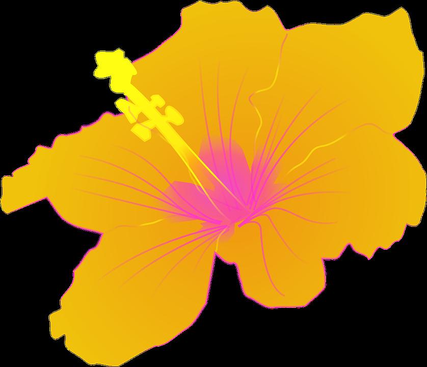 free vector graphic hibiscus - photo #34
