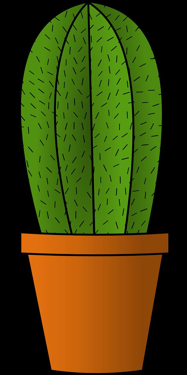 Картинки кактусов для детей