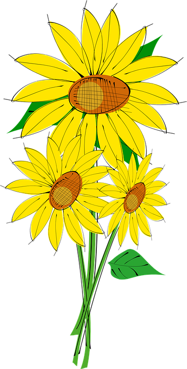 sun flower plant free vector graphic on pixabay rh pixabay com free vector sunflower clipart free vector sunflower background