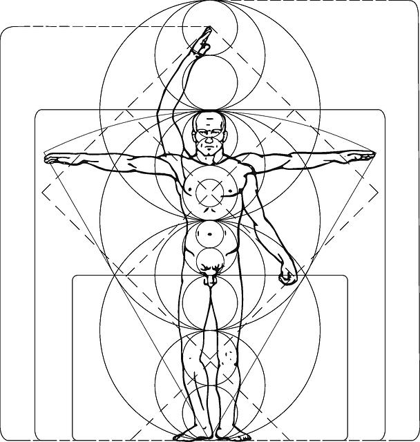 kostenlose vektorgrafik  mann  leonardo  vinci  k u00f6rper