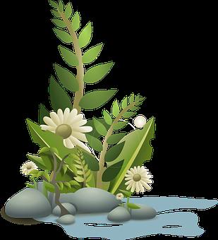 2 000 Free Leaf Leaves Vectors Pixabay
