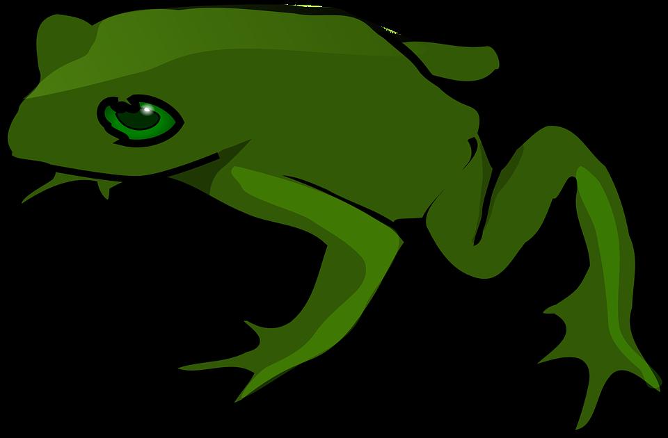 Katak Hijau Amfibi Gambar Vektor Gratis Di Pixabay