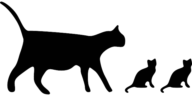 Cats Silhouette Black · Free Vector Graphic On Pixabay