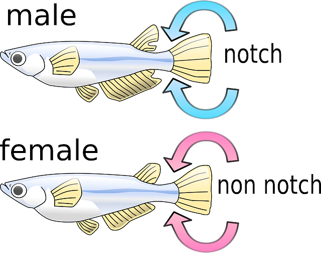 how to tell a female fish from a male fish
