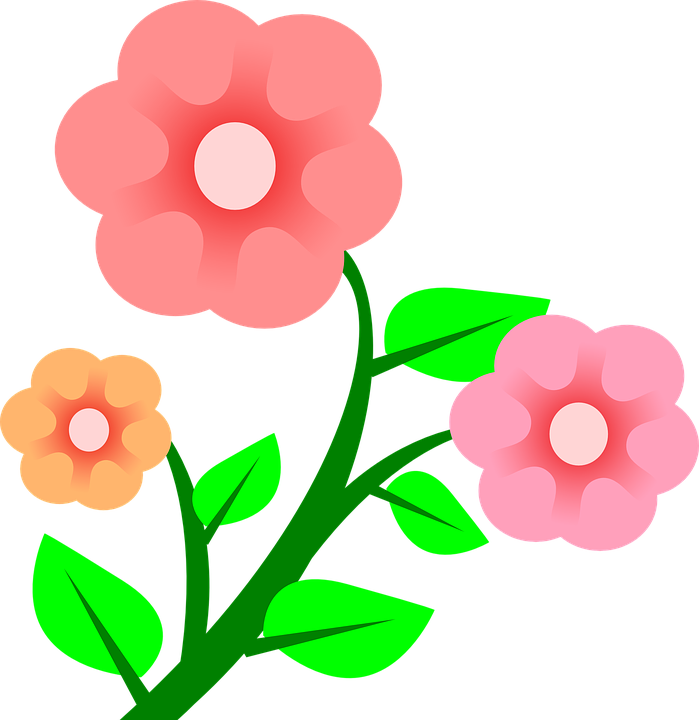 Rosa Flores Planta Gráfico Vetorial Grátis No Pixabay
