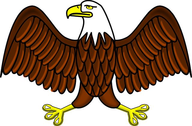 Bald Eagle Bird Free Vector Graphic On Pixabay