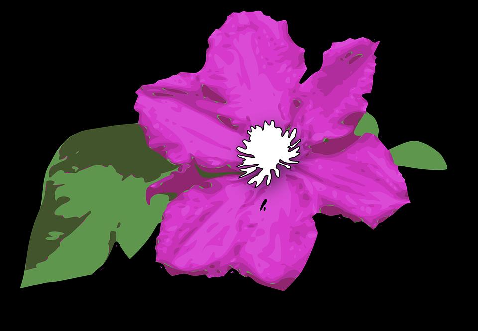 Flower Purple Violet Green Leaves Plant Floral