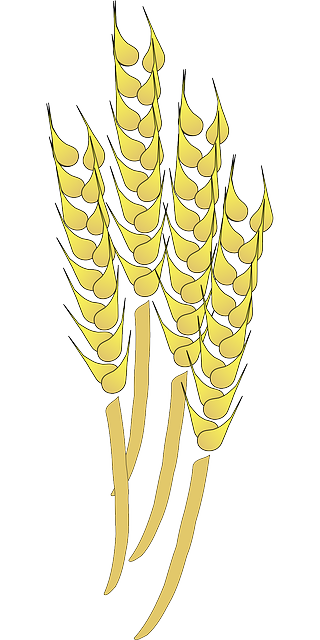 wheat grains harvesting 183 free vector graphic on pixabay