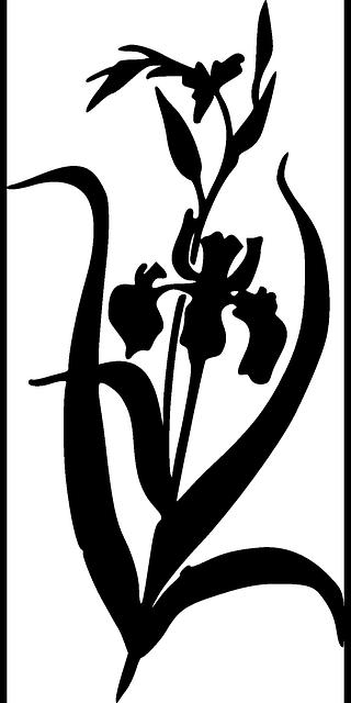 free vector graphic silhouette iris plants black