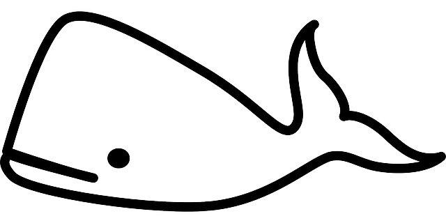 Whale Mammal Ocean 183 Free Vector Graphic On Pixabay