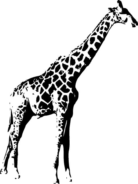 Жираф картинка черно белая 6