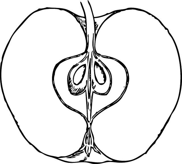 apple cut open  u00b7 free vector graphic on pixabay