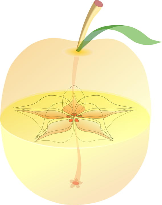 Apple Anatomy Inside Free Vector Graphic On Pixabay