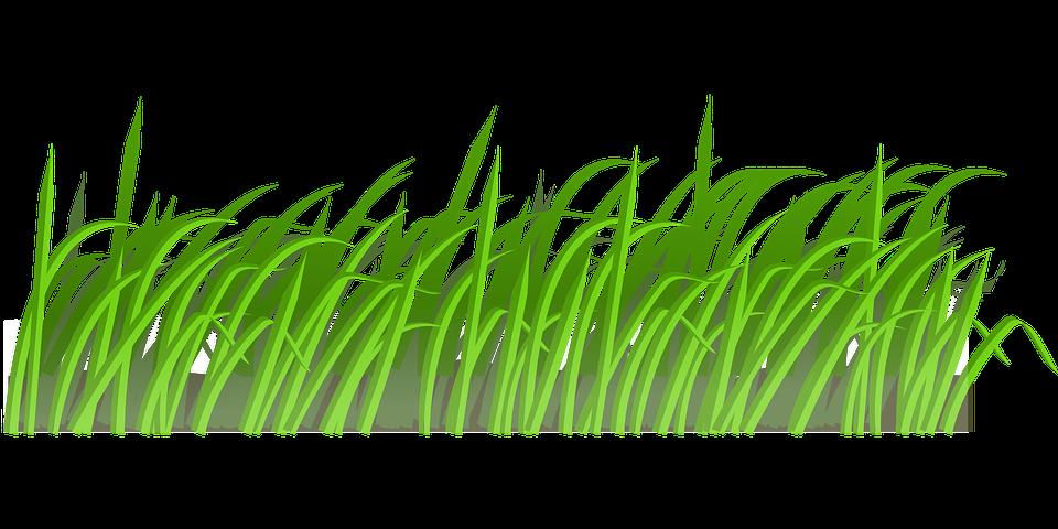 Erba Verde Prato Grafica Vettoriale Gratuita Su Pixabay