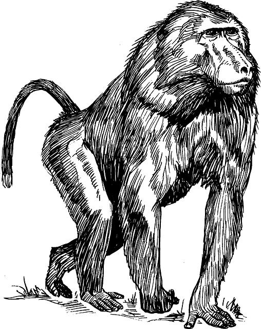 Free vector graphic baboon animal mammal walking - Dessin de babouin ...