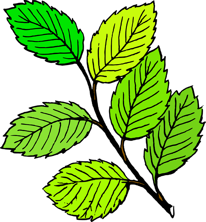 Rama De La Hoja árbol Gráficos Vectoriales Gratis En Pixabay