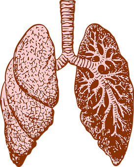 Lungs, Organ, Human, Diagram, Medicine
