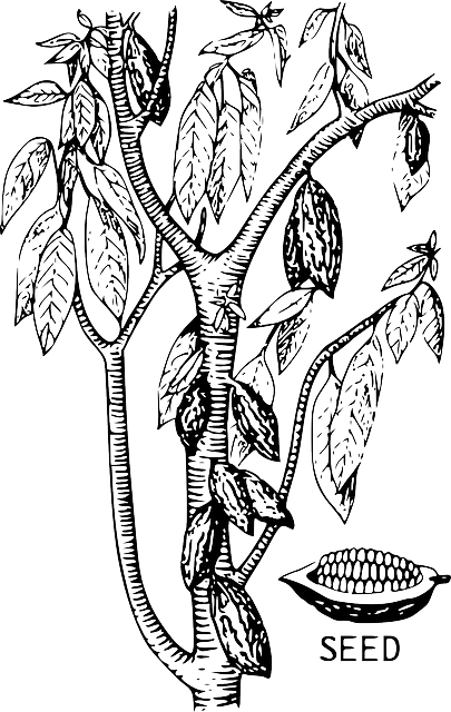 Free Vector Graphic Cacao Tree Cocoa Seed Bean Free