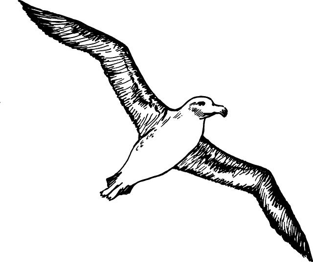 Albatross Seabirds Flying · Free vector graphic on Pixabay