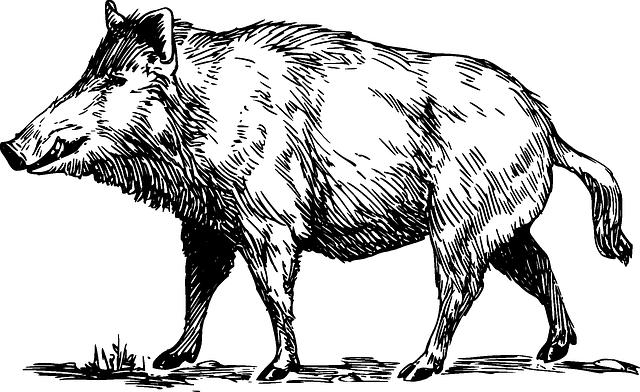 wildschwein wild tier · kostenlose vektorgrafik auf pixabay