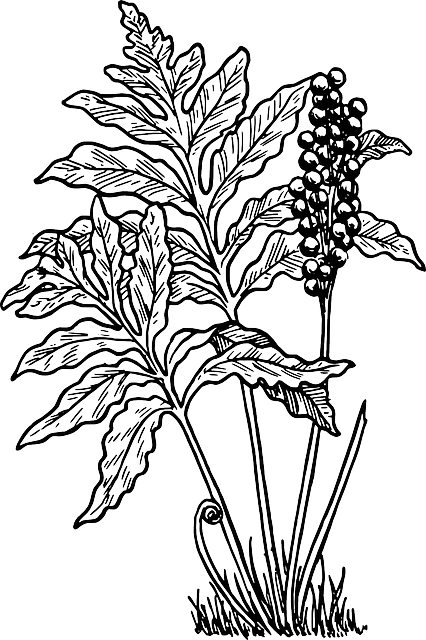 Free Vector Graphic Fern Little Plant Bush Forest Free Image On Pixabay 38018