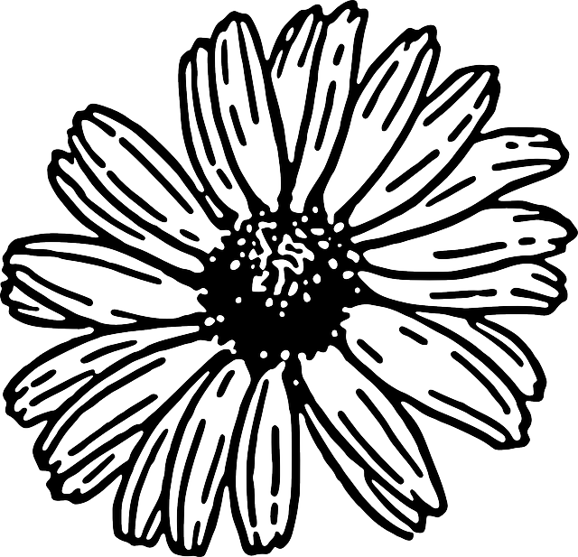 Gerbera Daisy Line Drawing Free vector graphic: D...