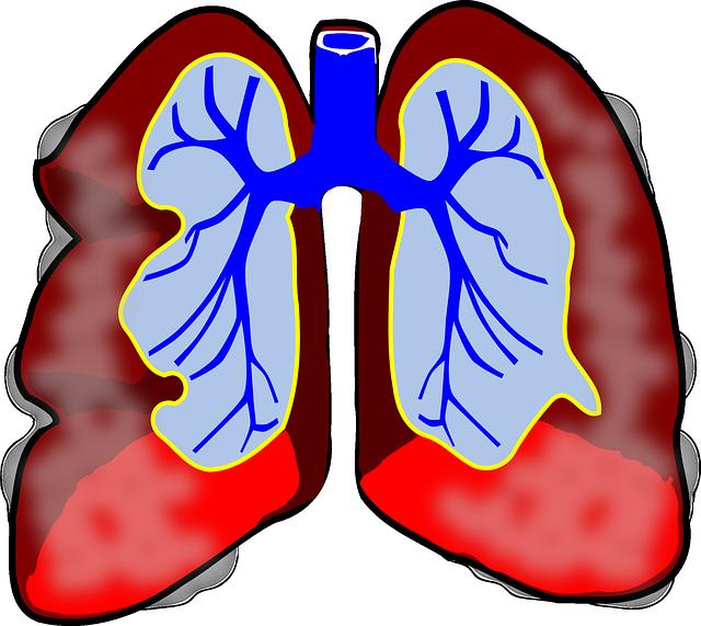 Lungs on Human Eye Model Diagram