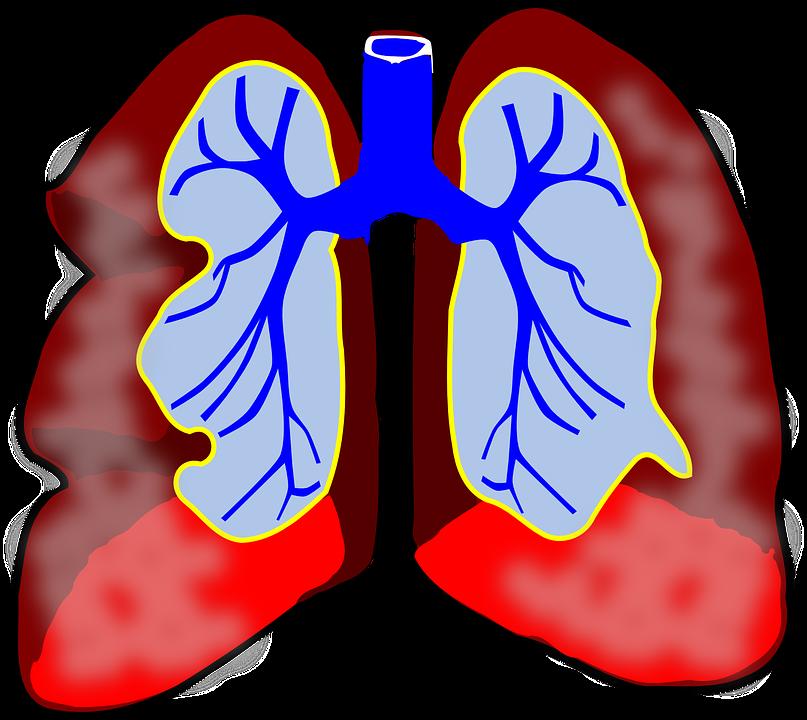Polmoni, Umano, Diagramma, Apparato Respiratorio