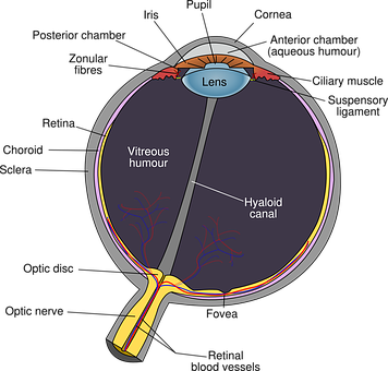 Eye, Diagram, Eyeball, Body, Pupil