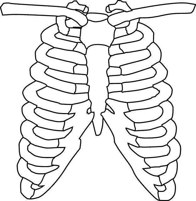 ribcage skeletal bones  u00b7 free vector graphic on pixabay