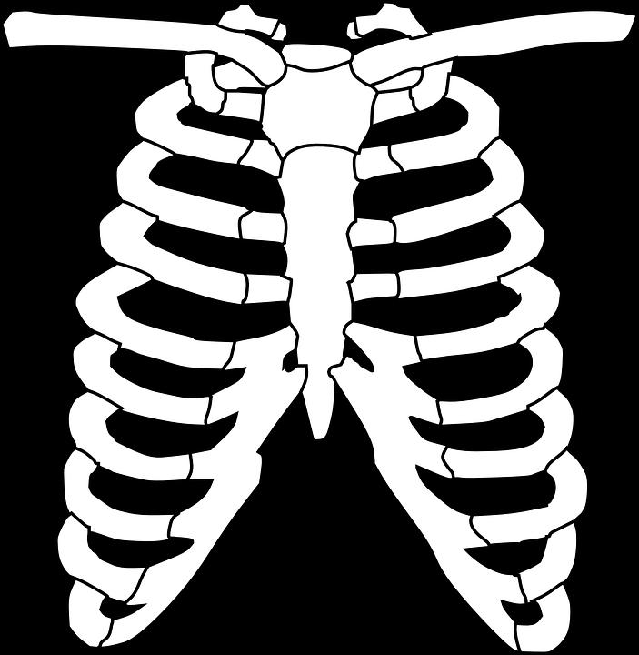 Brustkorb Skelett Knochen · Kostenlose Vektorgrafik auf Pixabay