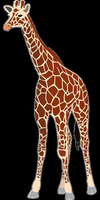 Free vector graphic giraffe mammal animal herbivore - Dessin de girafe en couleur ...