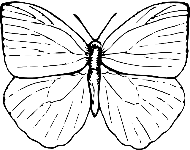 Butterfly Bug Beauty Free Vector Graphic On Pixabay