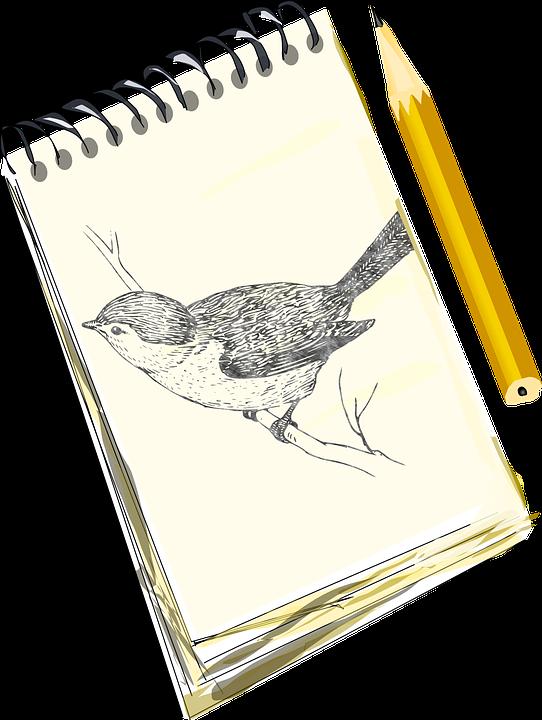 pencil sketch bird free vector graphic on pixabay