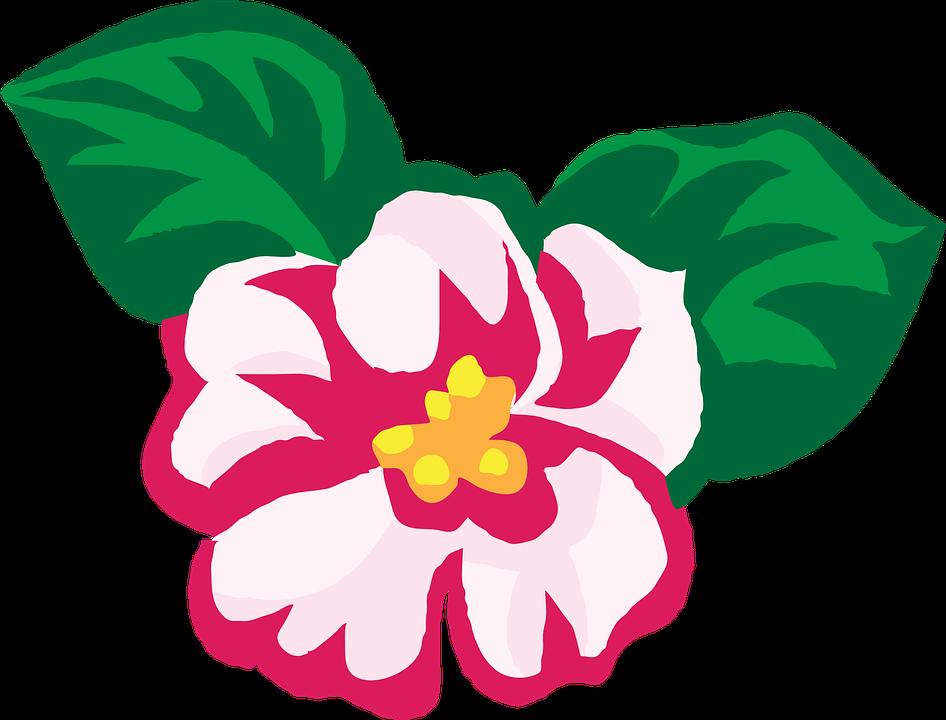 Imagem vetorial gratis Flores Africano Violetas