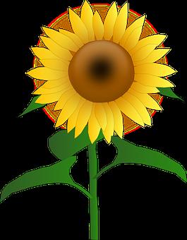 sunflowers vector graphics pixabay download free images rh pixabay com sunflower vector art sunflower vector free download