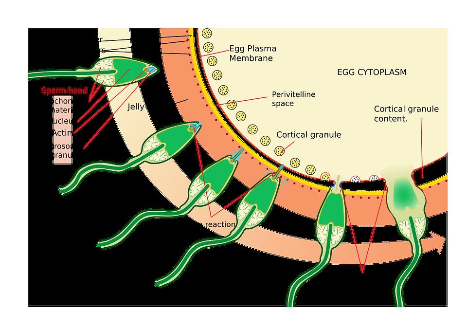 Medizin Wissenschaft Diagramm · Kostenlose Vektorgrafik auf Pixabay
