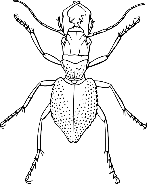 Line Drawing Insects : Free vector graphic spider bug insect image on