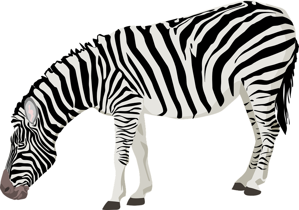 zebra animal mammal free vector graphic on pixabay rh pixabay com zebra vector free download zebra victor vasarely medium