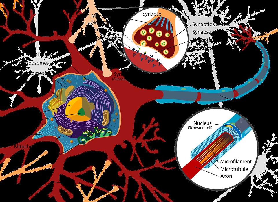Rot Wissenschaft Diagramm · Kostenlose Vektorgrafik auf Pixabay
