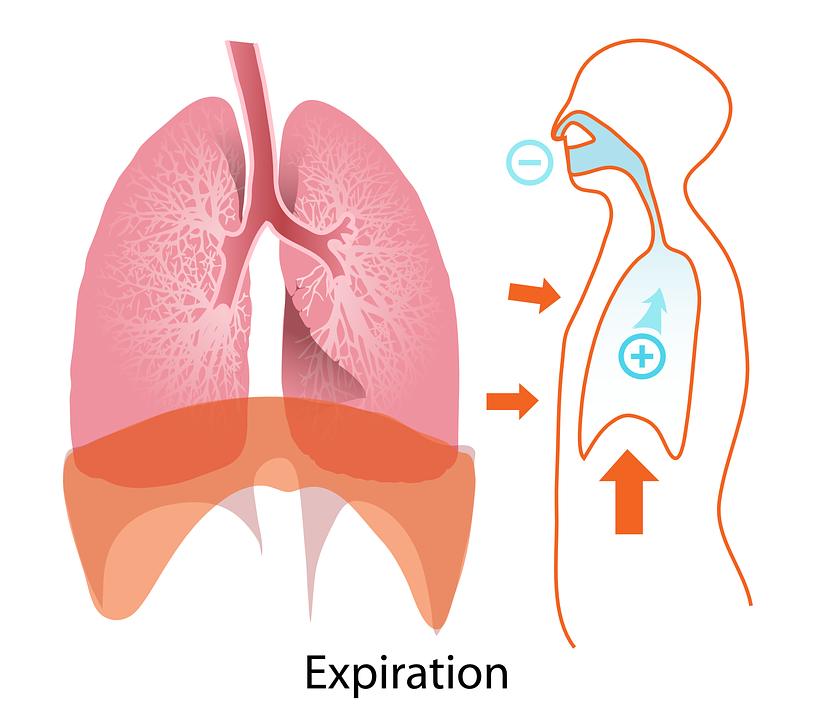 Körper Menschliche Ablauf · Kostenlose Vektorgrafik auf Pixabay