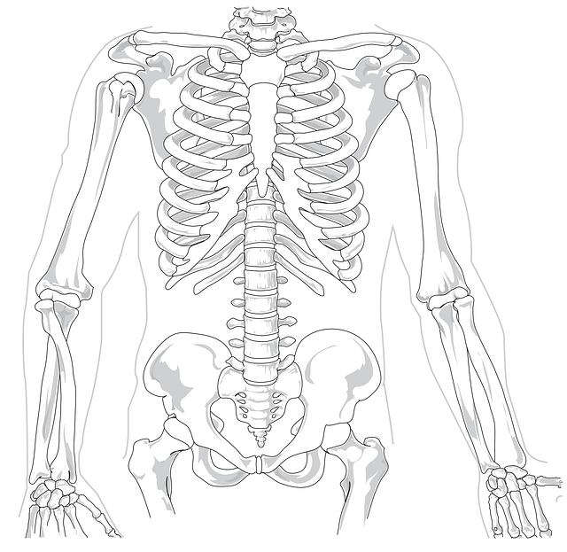 kerangka manusia diagram sakit  u00b7 gambar vektor gratis di
