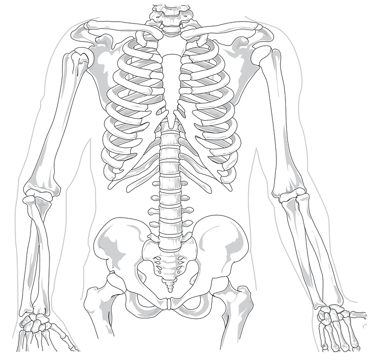 free vector graphic  skeleton  human  diagram  backache