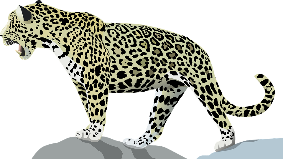 Jaguar, Animales, Gato, Silvestre, Selva, Mamíferos