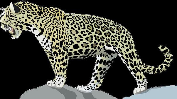 10 Free Jaguar Leopard Vectors Pixabay