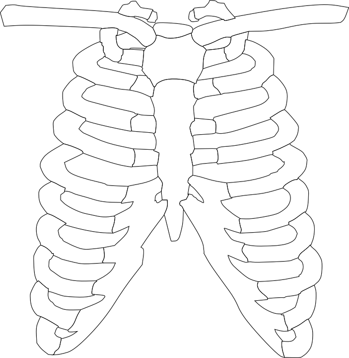 free vector graphic: rib, cage, ribs, skeleton, bones - free image, Skeleton