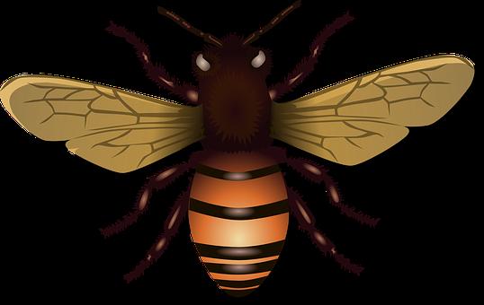 Abeilles, Abeille, Insectes, Mouche