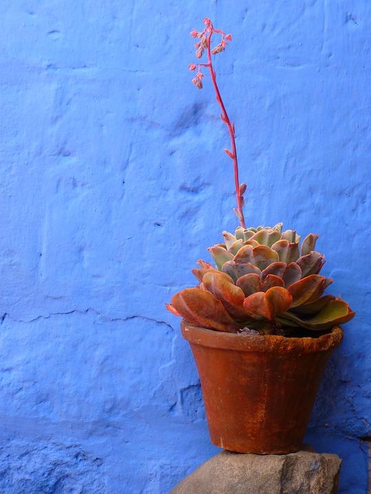 Blumentopf pflanze dekoration kostenloses foto auf pixabay for Blumentopf rot